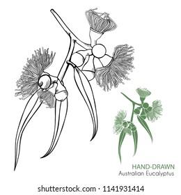 Hand drawn Australian Eucalyptus Design Elements