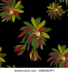 hand drawn australian native wild flower leucadendron colorful green and red leaf in seamless pattern on dark background