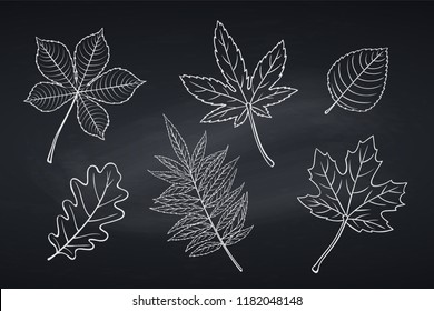 Hand drawn autumn leaves maple, oak, elm, chestnut, Japanese maple and rhus typhina. Chalkboard style. Vector illustration.
