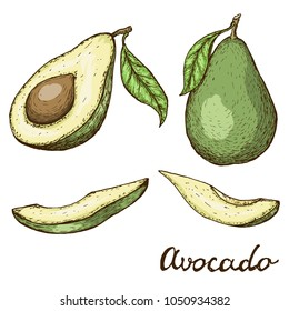 Hand drawn avocado set. Whole avocado, sliced pieces and half sketch. Engraved style illustration. Vector illustration EPS10