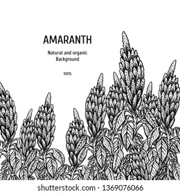 Hand drawn background with amaranth. Retro sketches. Vintage design. Layout for package. Black and white mockup. Vector illustration.