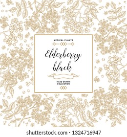 Hand drawn background with elderberry black. Elderberry or sambucus branches with flowers and berries. Vector illustration vintage.