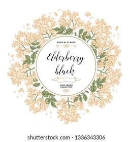 Hand drawn background with elderberry black. Elderberry or sambucus flowers and leaves. Vector illustration.