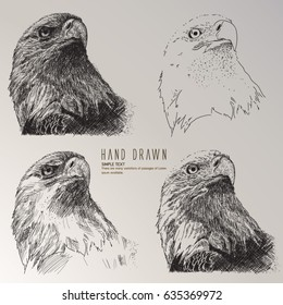 Hand drawn bald eagle head sketch.
