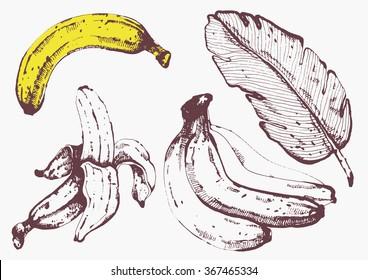 hand drawn banana vector collection