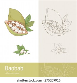Hand drawn baobab fruit with leaves and seeds, botanical drawing