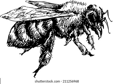 hand drawn bee