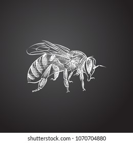 Hand drawn bee sketch symbol. Vector sting element in trendy style.