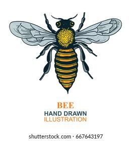 Hand drawn bee vector illustration. Honey Bee logo or emblem graphic doodle design.