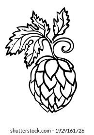 Hand drawn Beer Hop Cone minimalistic stylized line art. Common hop or Humulus lupulus with leaves.
