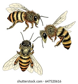 Hand drawn bees sketch set in honey spectrum color. Vector illustration of three bees from various angles in detail.