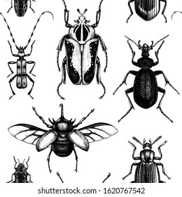 Hand drawn beetles backdrop, Seamless pattern with high detailed insects sketches. Realistic background with entomological elements. Black and white beetles illustrations.
