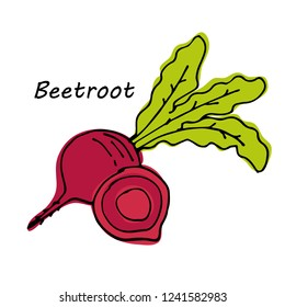 Hand drawn Beetroot isolated on white background. vector illustration.