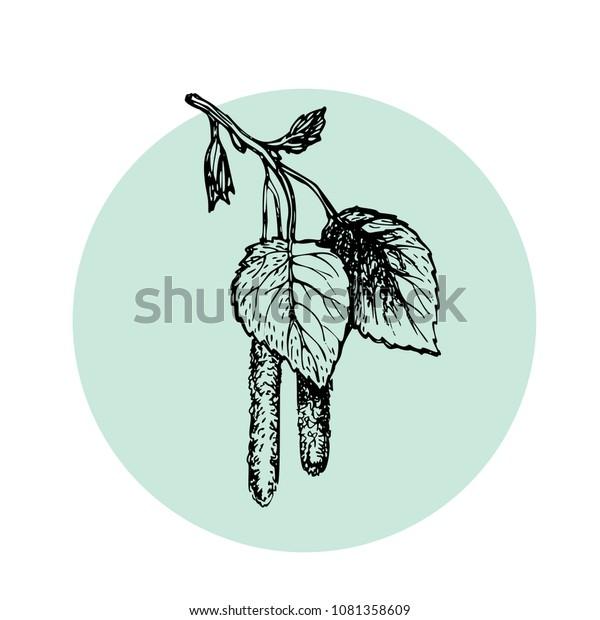Handgezeichneter Birkenzweig mit Falken. Doodle Blumen Design Element. Handgefertigter Baumzweig mit Blättern. Vektorillustration einzeln.