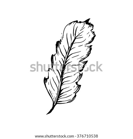 Hand Drawn Bird Feather Symbol Knowledge Stock Vector Royalty Free