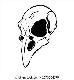 Hand drawn bird skull with line art