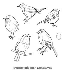 Hand drawn birds. Robin (Erithacus rubecula) Vector sketch illustration.