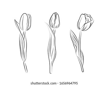 Hand drawn black tulips isolated on white background. Vector sketch illustration
