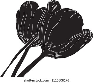 Hand drawn, black, vector tulips