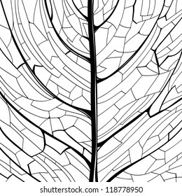 Hand drawn black and white pattern of the leaf structure