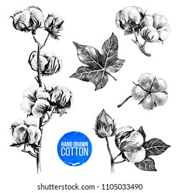 Hand drawn black and white set of cotton plant. Vector illustration in vintage style