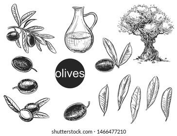 Hand drawn black and white vector illustration set of olives, tree, oil, leaf. sketch.