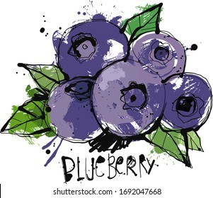 Hand drawn Blueberry Sketch reduced to one layer