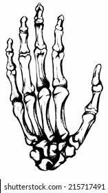 Hand drawn hand bones