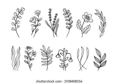 Hand Drawn Botanical Flowers Set