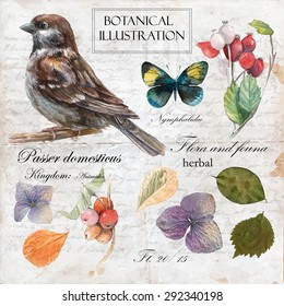 Hand drawn botanical illustration in vintage style.Vector set of watercolor hand drawn sparrow,butterflies,barberry and dry flower Isolated on vintage background  with letters and text.