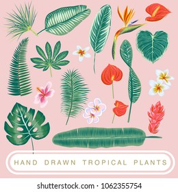 Hand drawn botanical vector illustration with tropical plant. Isolated. EPS8. Tropical element.