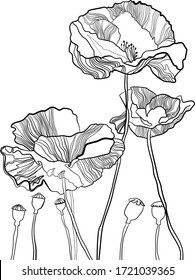 Hand drawn botanical vector illustration of poppy flowers and burgeons in graphic style. Black and white line art on white background. Floral composotion.