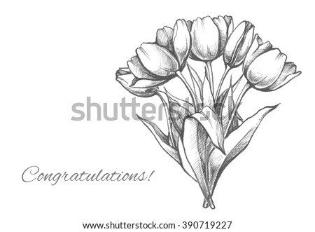 hand drawn bouquet tulips sketch elegant stock vector royalty free