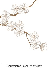 Hand drawn branch of plums blossom isolated on white background