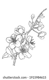 Hand drawn branch of sakura with blooms, flowers, leaves, petals.  Modern line art style. Botanical composition for card, invitation, logo, fabric print.