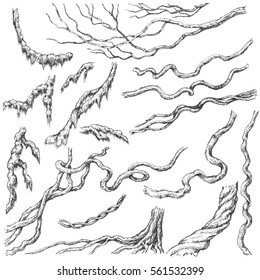 Hand drawn branches and leaves of tropical plants. Liana and moss covered twigs sketch.