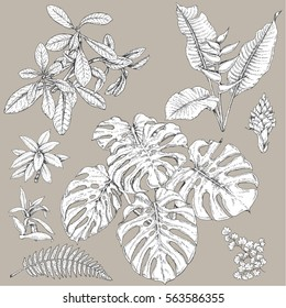 Hand drawn branches and leaves of tropical plants. Black and white floral  set isolated on gray background. Synadenium, monstera, fern fronds sketch.