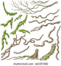 Hand drawn branches and leaves of tropical plants. Liana and moss-covered twigs isolated on white. Vector sketch.