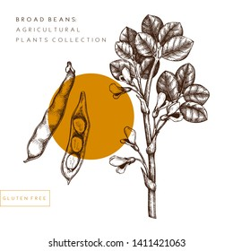 Hand drawn broad bean illustration. Gluten free food. Agricultural plant drawing with beans, leaves and flowers. Vegan and healthy. Great for packaging, label, icon. Vector outlines. Trendy design