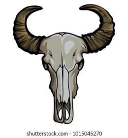 Hand drawn buffalo skull. Native American symbol. Head bull skeleton vector illustration.