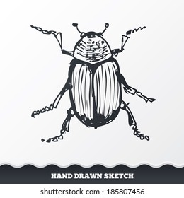 Hand drawn bug. Sketched pine beetle. Insect symbol. Vector