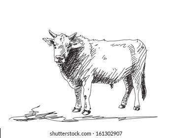 Cow Hand Drawn Images, Stock Photos & Vectors | Shutterstock
