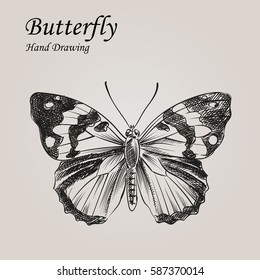 Hand drawn Butterfly in sketch style. Retro hand-drawn nature elements vector illustration. Great for poster, banner, voucher, coupon.