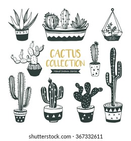 Hand drawn cacti collection (vector design)