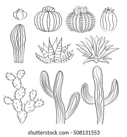 Hand drawn cactus set. Cacti, prickly pear, and agave