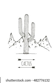 Hand drawn cactus. Vector illustration