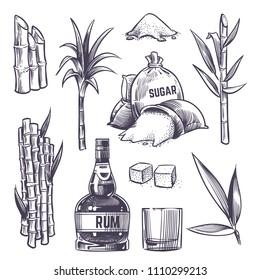 Hand drawn cane leaves, sugar plant stalks, sugarcane farm harvest, glass and bottle of rum. Vector set in vintage engraving style. Illustration of alcohol drink and sugarcane