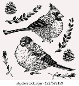 Hand drawn cardinal and tit birds in vintage style. Beautiful graphics with birds, plants and cones. Winter greeting card.