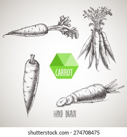 Hand drawn carrot set. Organic eco vegetable food background.Vector sketch style illustration.