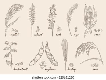 Hand drawn cereals